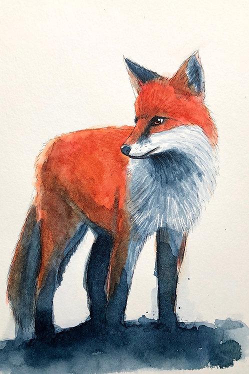 Red fox no.3