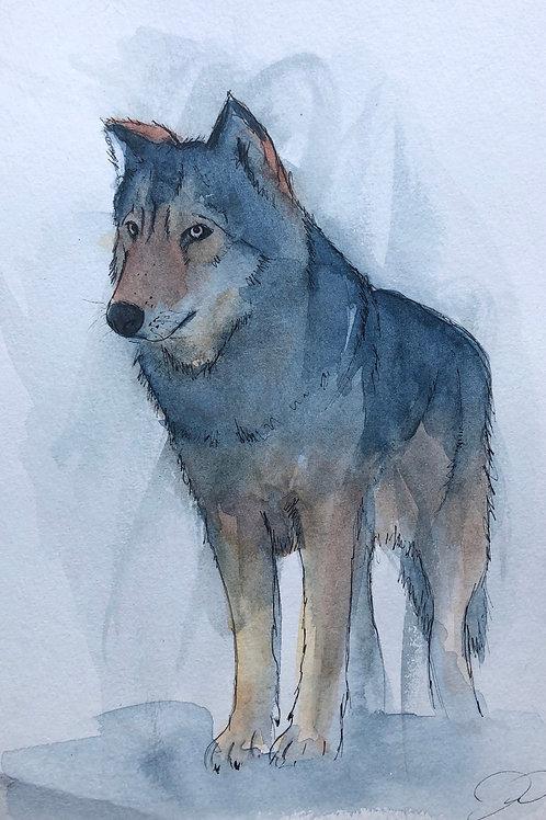 Grey wolf 2