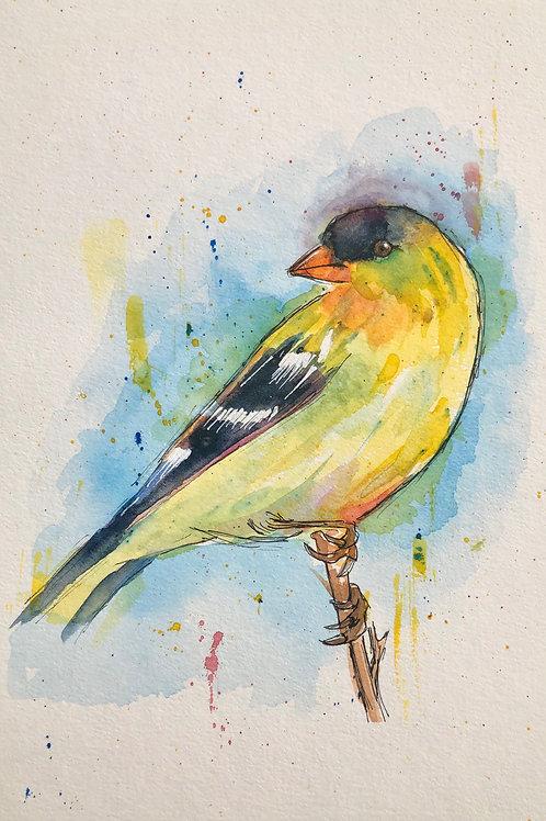 American Finch