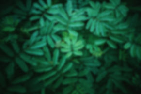 photography-of-leaves-1172675.jpg