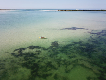 CEO, John Higley Interview: Is toxic algae the new normal in area lakes?