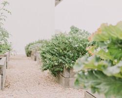 Estate grown herb and vegetable gard