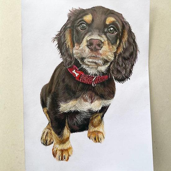Pet Portrait A3 size