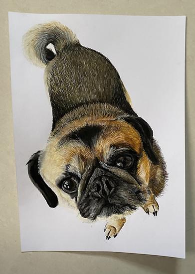 Pet Portrait A4 size