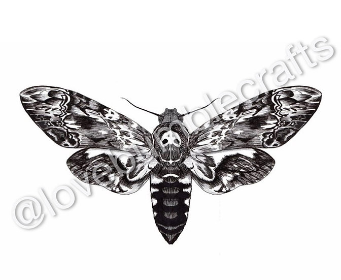 Death's-head Hawkmoth Print