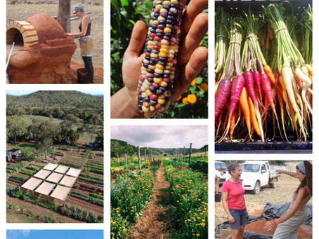 1 day introduction to permaculture course - 5th december 2020