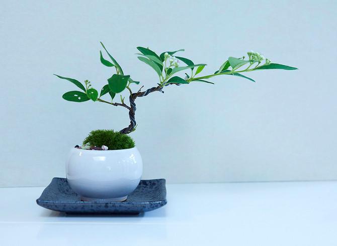 BONSAI workshop 盆栽ワークショップのお知らせ