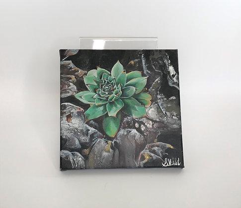 Sharon Villet - Cactus