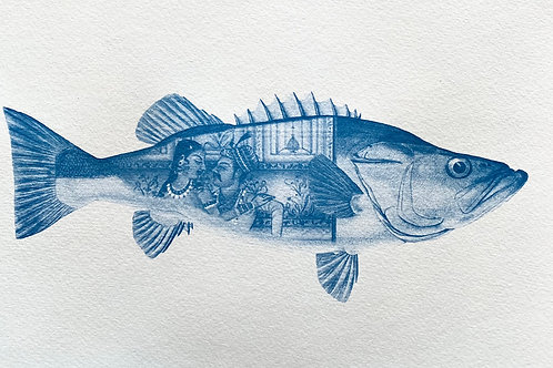 Kama Sutra Fish 2