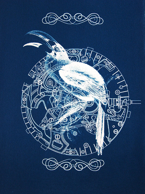 Birds of Time1