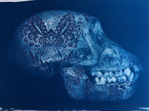 Skull number 2