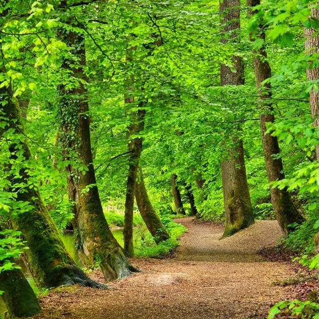 forest-5133951_1920.jpg