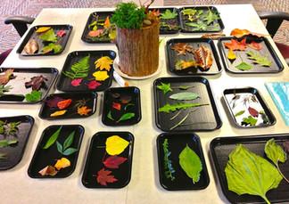 montessori botany1.jpg