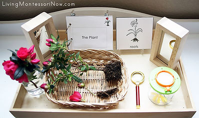 Montessori-Nature-Tray-with-Parts-of-the