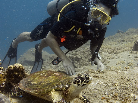 Hawksbill Turtle at Laem Tien Bay
