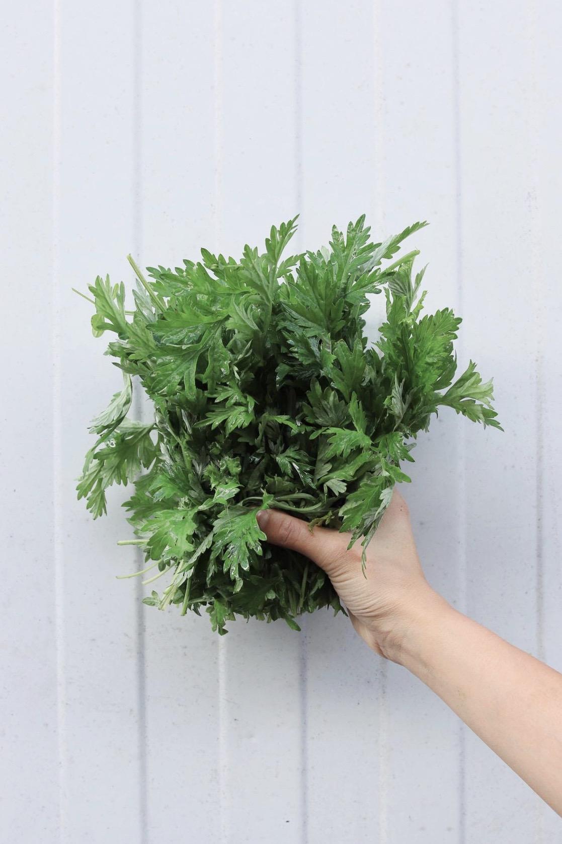 listy chryzantémy jedlé
