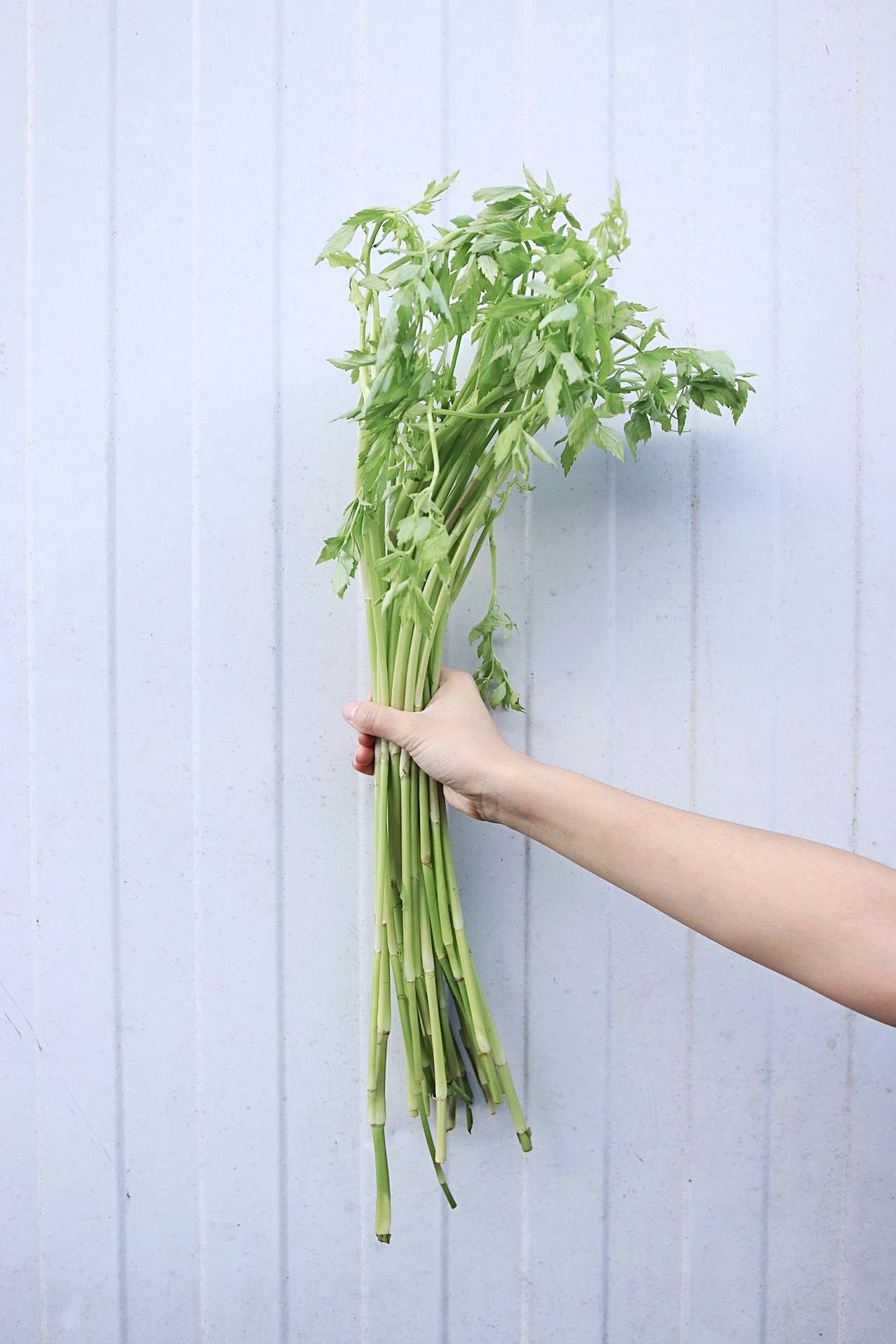 vodní celer