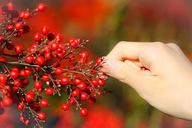 harvest-5729674_1920.jpg