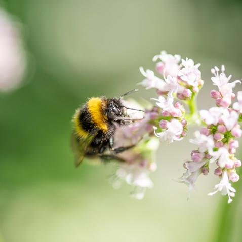 toom Bienenschutz