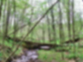 Dysart Woods Walking Trail.jpg