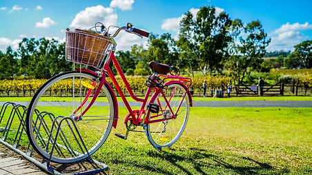 basket-bicycle-bike-805303.jpg