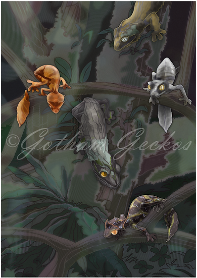 Uroplatus Phants and Sikorae 11x17