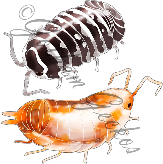 Isopod Stickers