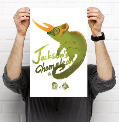 Painted Jackson's Chameleon