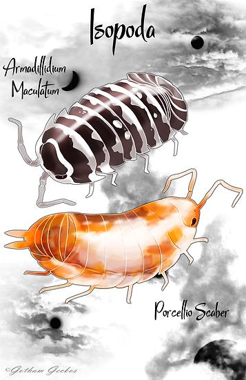 Isopod Love 11x17