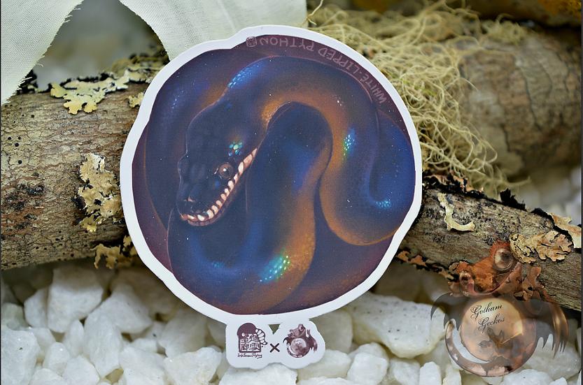 White-Lipped Python