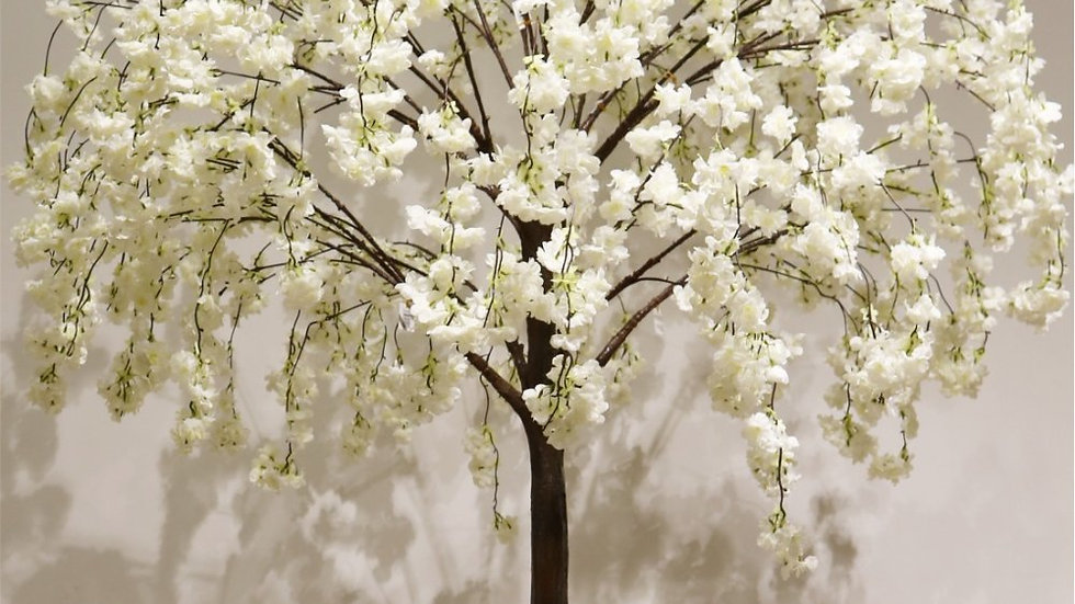 Weeping Blossom Tree