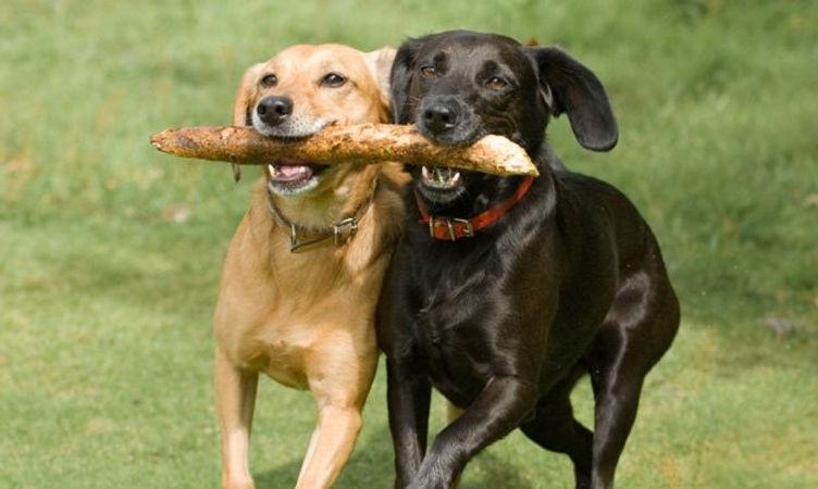 dogs-in-Park.jpg