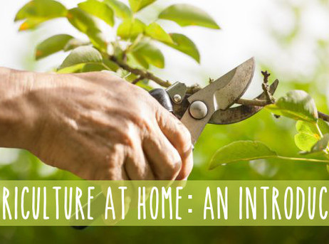 Arboriculture at Home: A DIY Guide to Tree Care, An Introduction