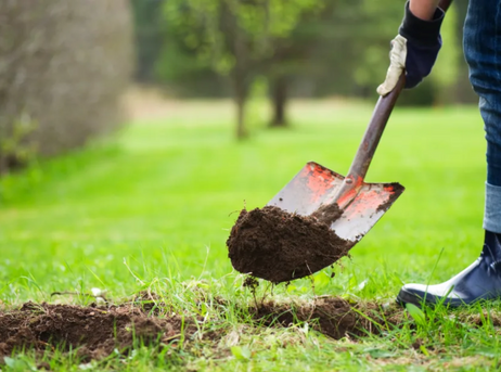 The What, When, and How of Tree Planting