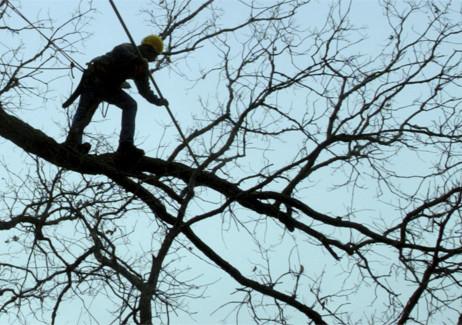 'Tis the Season to Trim Your Trees