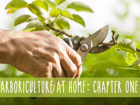 Arboriculture at Home: CH.1, Stocking Your Arsenal