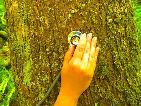 Learn to Speak Tree