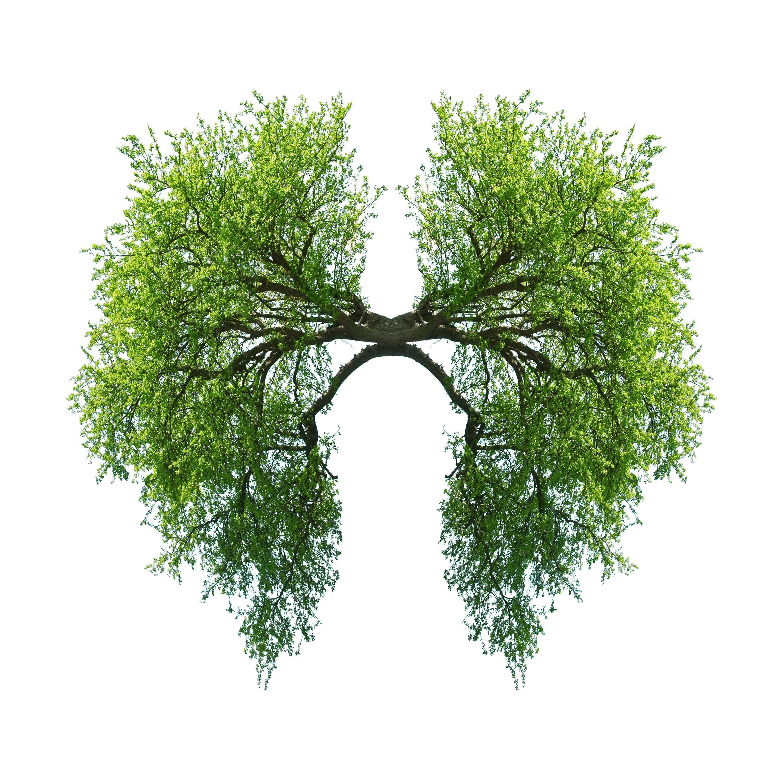poumon nature