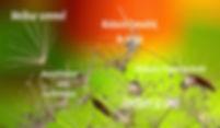 Access-bars-couleurs.jpg