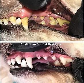 TeethCompare.jpg