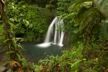 36-_Ecrevisse_Warerfalls2_Basse_Terre.j