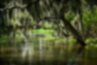 Swamp-165 HD.jpg