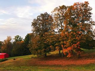 Fall on the Lavender Farm
