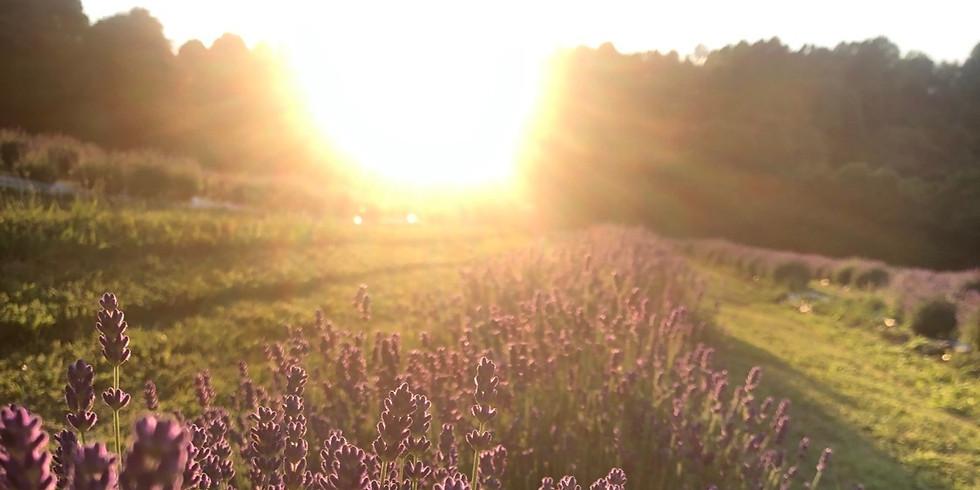 Sunset Lavender Yoga 7/8/2020