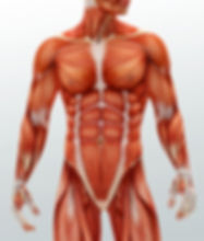 medical-specialists-of-the-muscular-system_01002800_174382.jpg