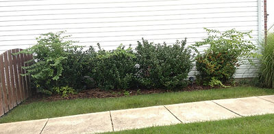 Hedge Trimming St. Peters Missouri
