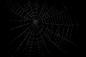 web%203_edited.jpg