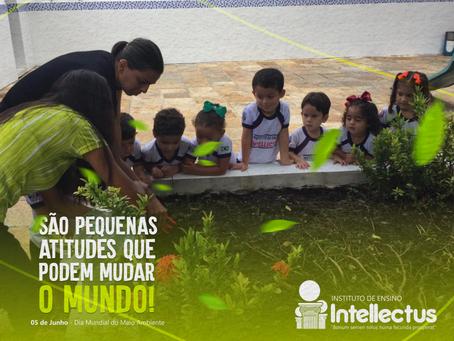 Saiba como surgiu o Dia Mundial do Meio Ambiente