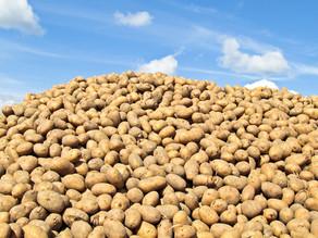 WEEK 15: The Potato Isn't the Problem