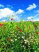 meadow-1574318_1920.jpg